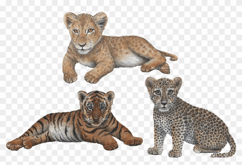 Big Cat Cubs Combo Pack Jungle Animals Wall Decals.