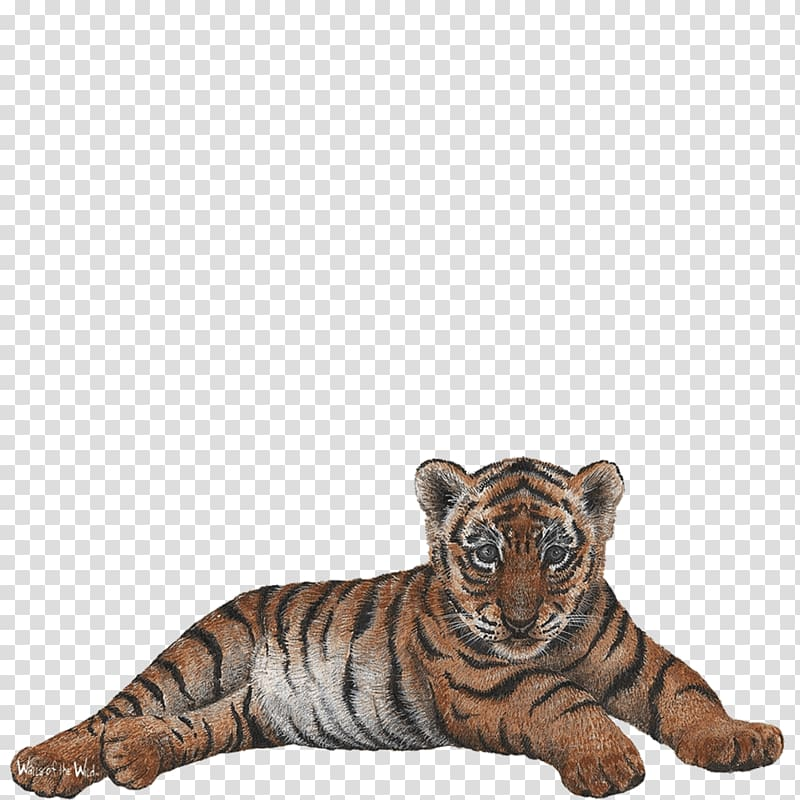 Tiger Wall decal Sticker, tiger cub transparent background.