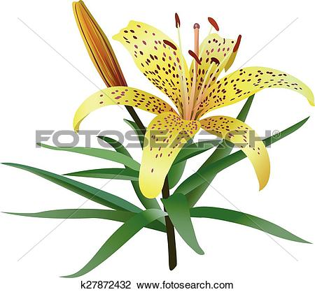 Clipart of Photorealistic illustration of yellow tiger lily.