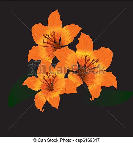 Vectors Illustration of Orange tiger lily on black background.