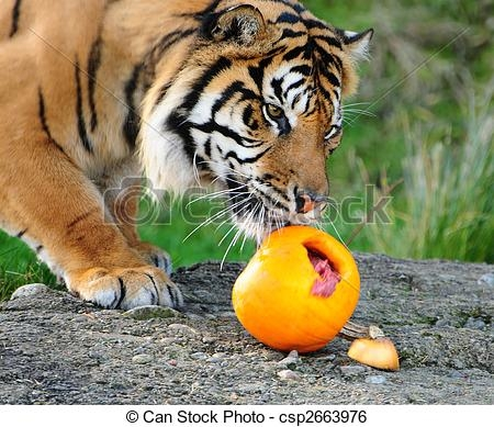 tiger eating clipart #16