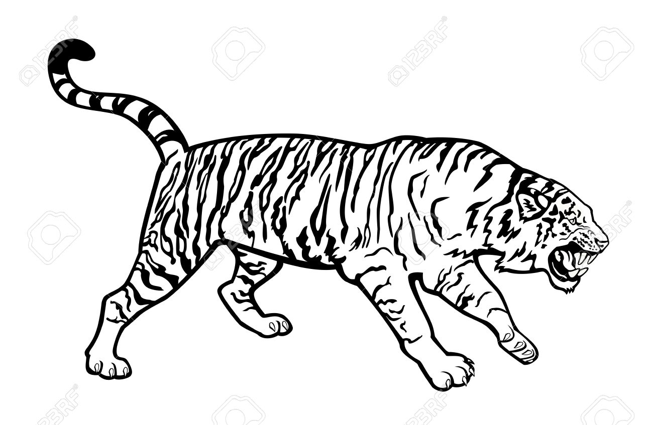 996 Tiger Clipart Black And White Tiger Clipart Black And White.