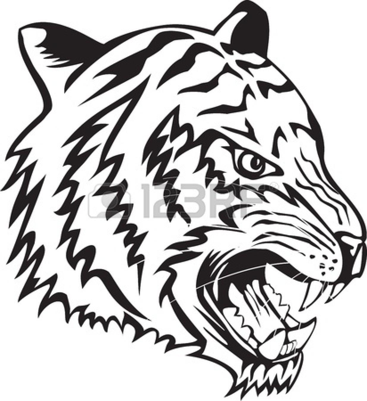 Tiger Eyes Drawing.