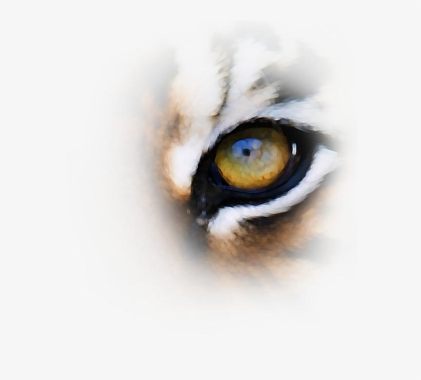 Tiger Eyes Png Download.
