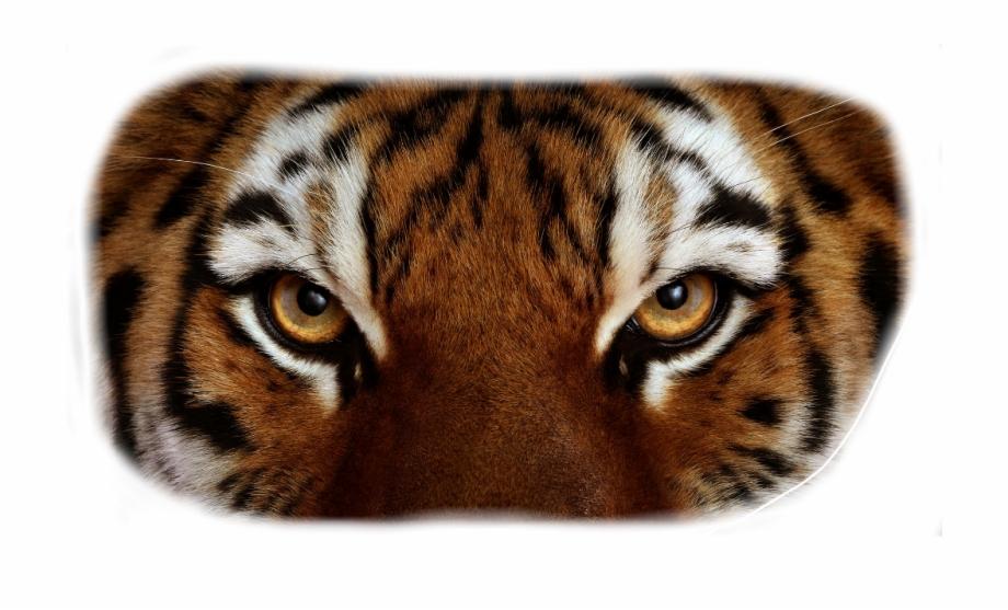 tiger #eyes.