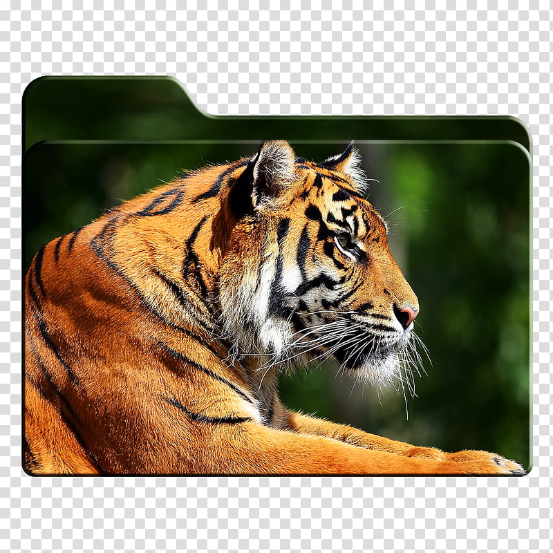 Big Cats HD Folder Icons Mac Only , . Tiger Profile.