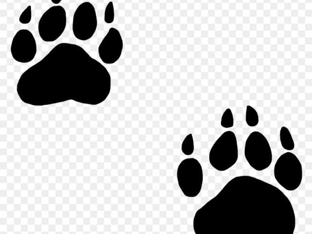 Footprint clipart tiger.