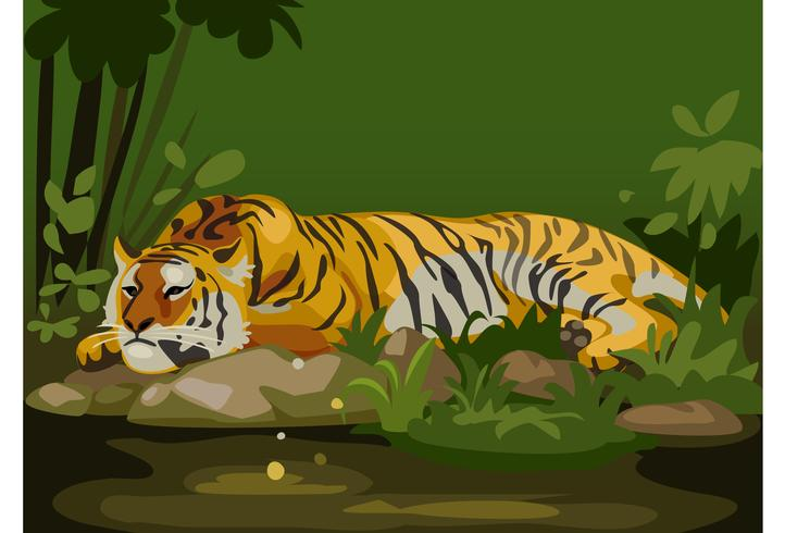 tiger in jungle.