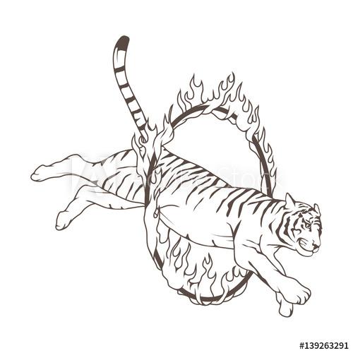 Circus tiger jumping through a fire circle.