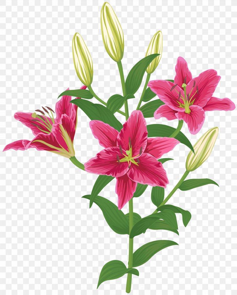 Lily Lilium Female Liliaceae Flower, PNG, 6438x8000px.