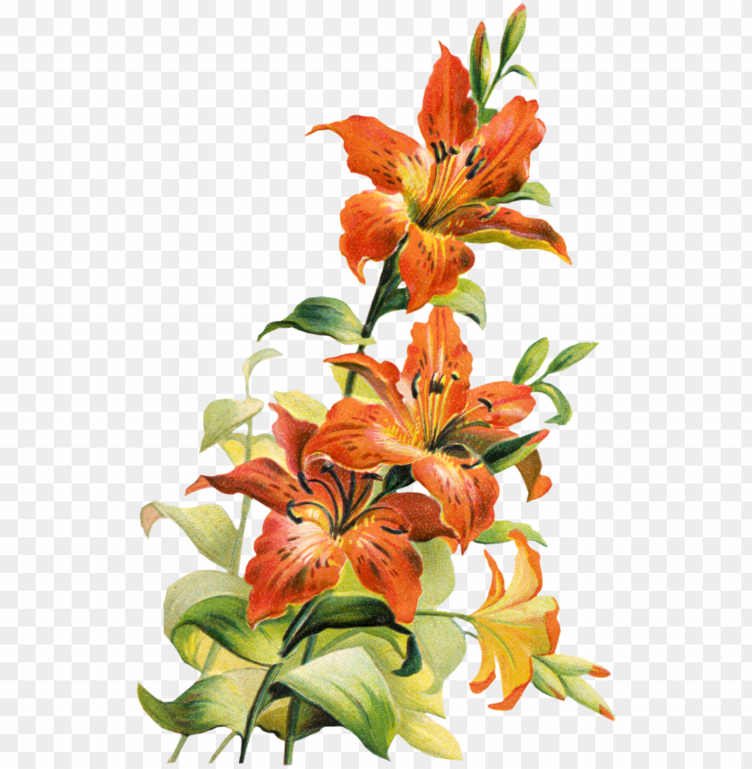 Download 195832 tiger lily flower clipart free clip art.