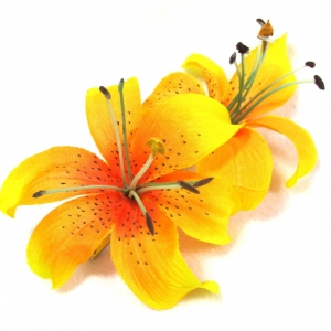Free Tiger Lily Cliparts, Download Free Clip Art, Free Clip.