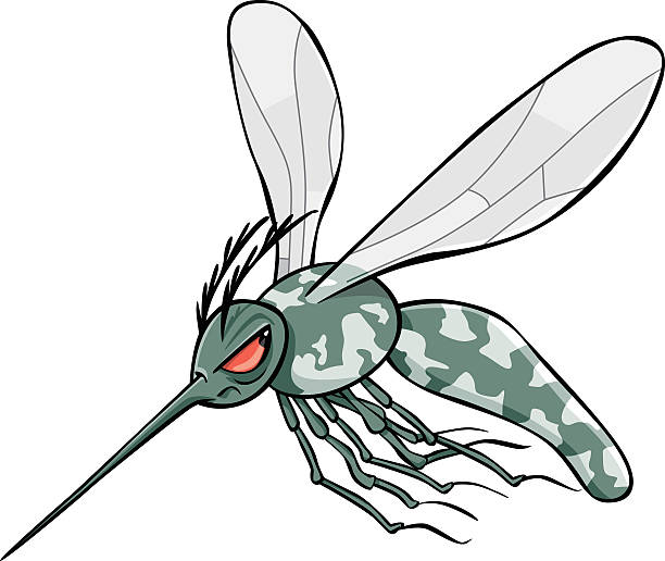 Asian Tiger Mosquito Clip Art, Vector Images & Illustrations.