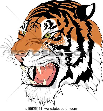 Tiger Clip Art Royalty Free. 10,769 tiger clipart vector EPS.