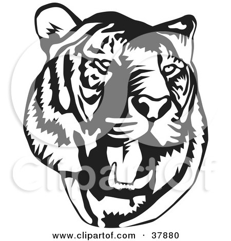 Clipart Illustration of a Standing Black And White Tiger With Its.