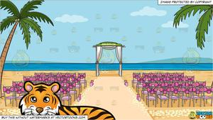 A Beautiful Tiger Lying Down and A Beach Wedding Ceremony Venue Background.