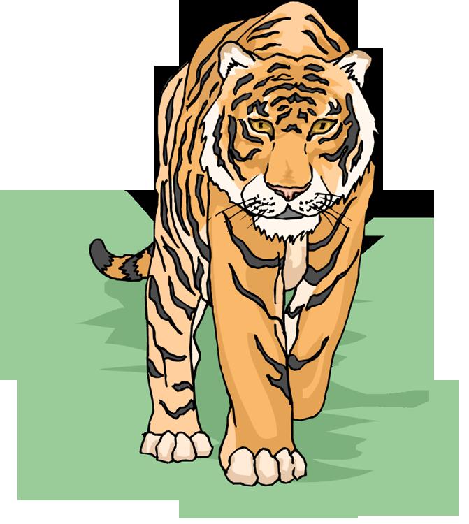 Snow Clipart Tiger Cartoon #648056.