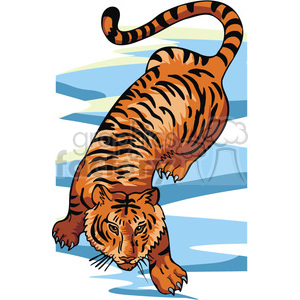 Tiger prowling clipart. Royalty.