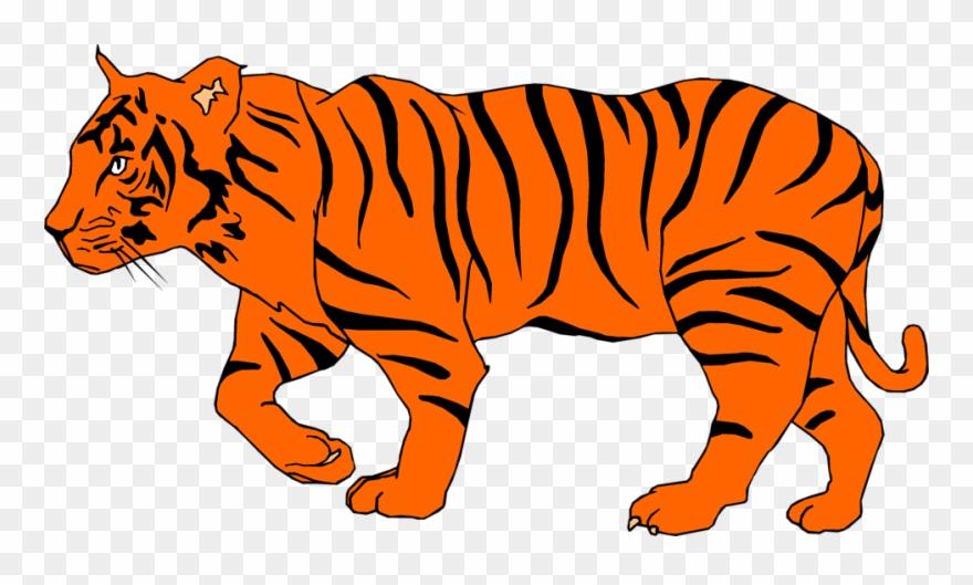 White Tiger Clipart Depauw.