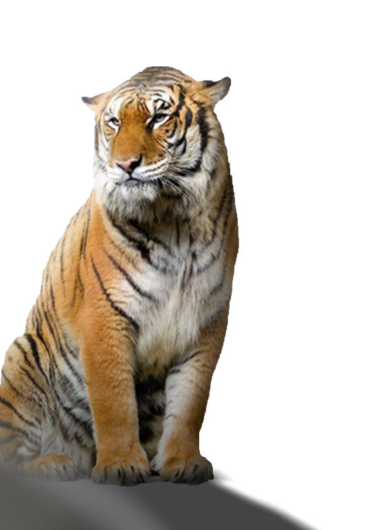 Tiger Editing Background Png Download for Picsart.