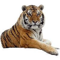 Download Tiger Free PNG photo images and clipart.
