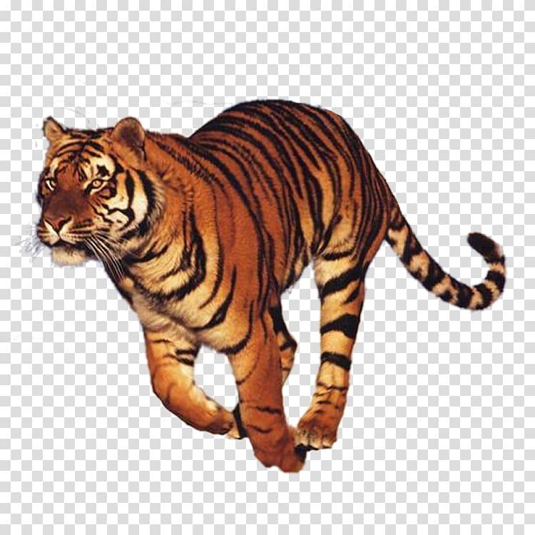 Run Tiger Felidae National Museum of the Civil War Soldier.