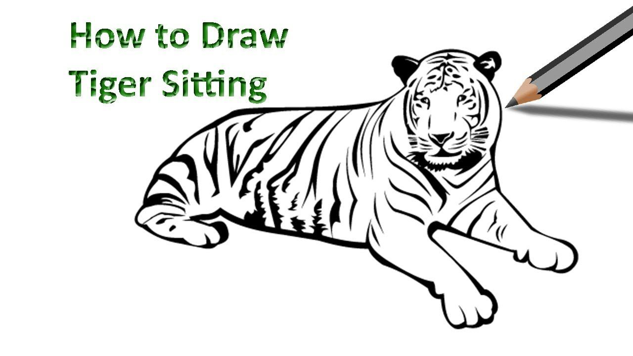 Tiger Sitting Drawing in 2019.