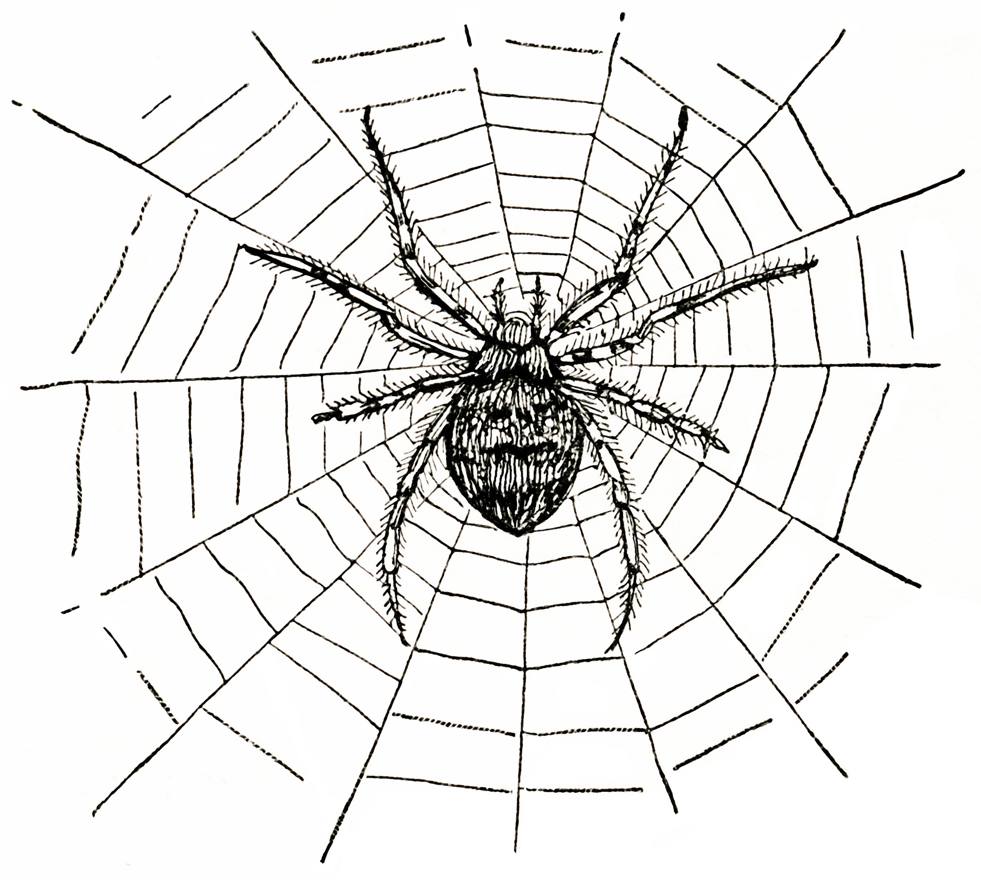 spider clip art #30.