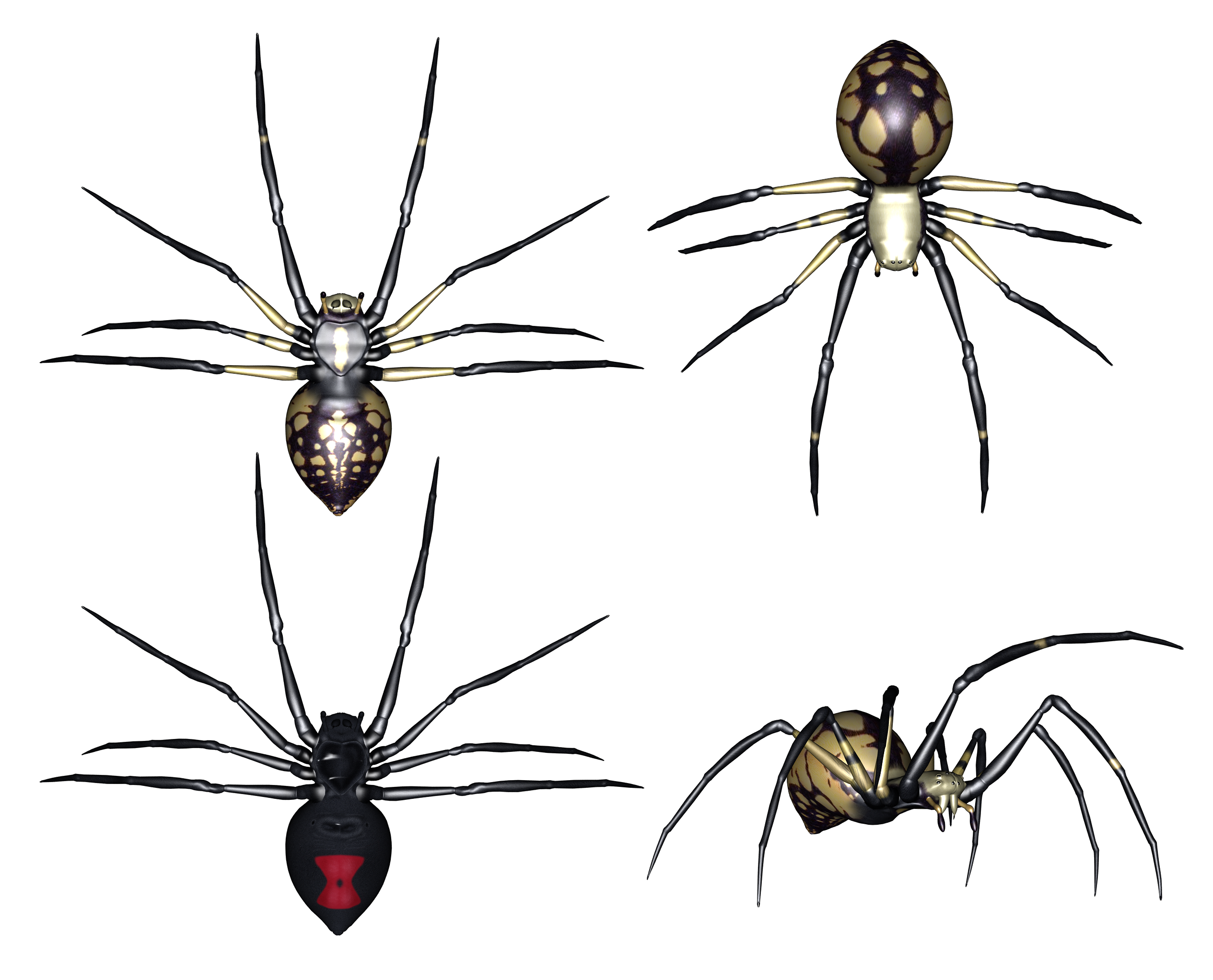 Set of Spiders Clipart.