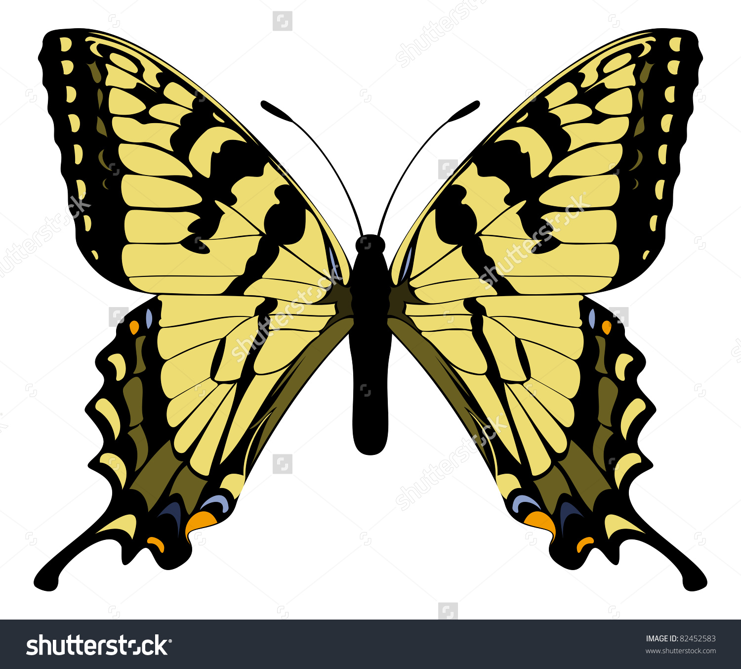 Canadian Tiger Swallowtail Stock Vector 82452583.