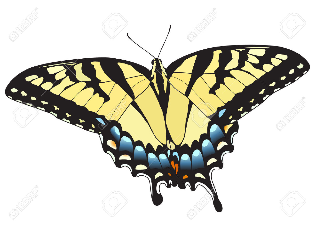 Eastern Tiger Swallowtail Butterfly. Vector. Royalty Free Cliparts.