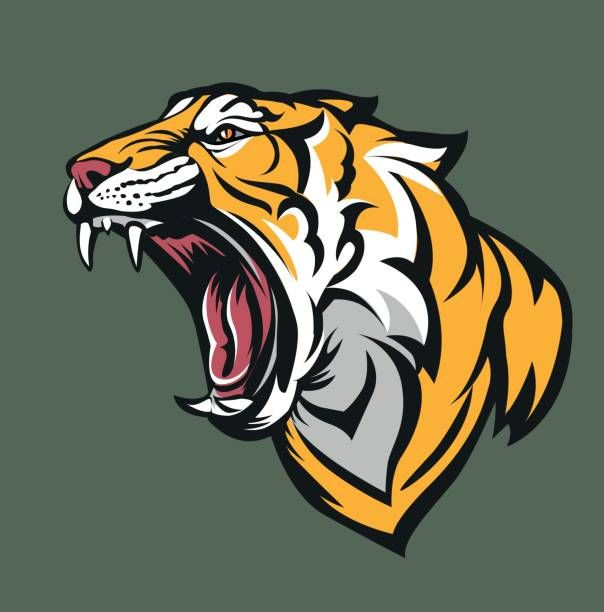 Vector illustration Tiger fierce with open mouth in 2019.