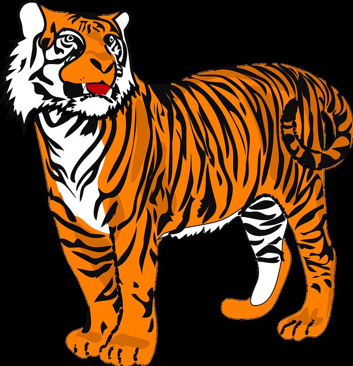 Tiger, Cat.