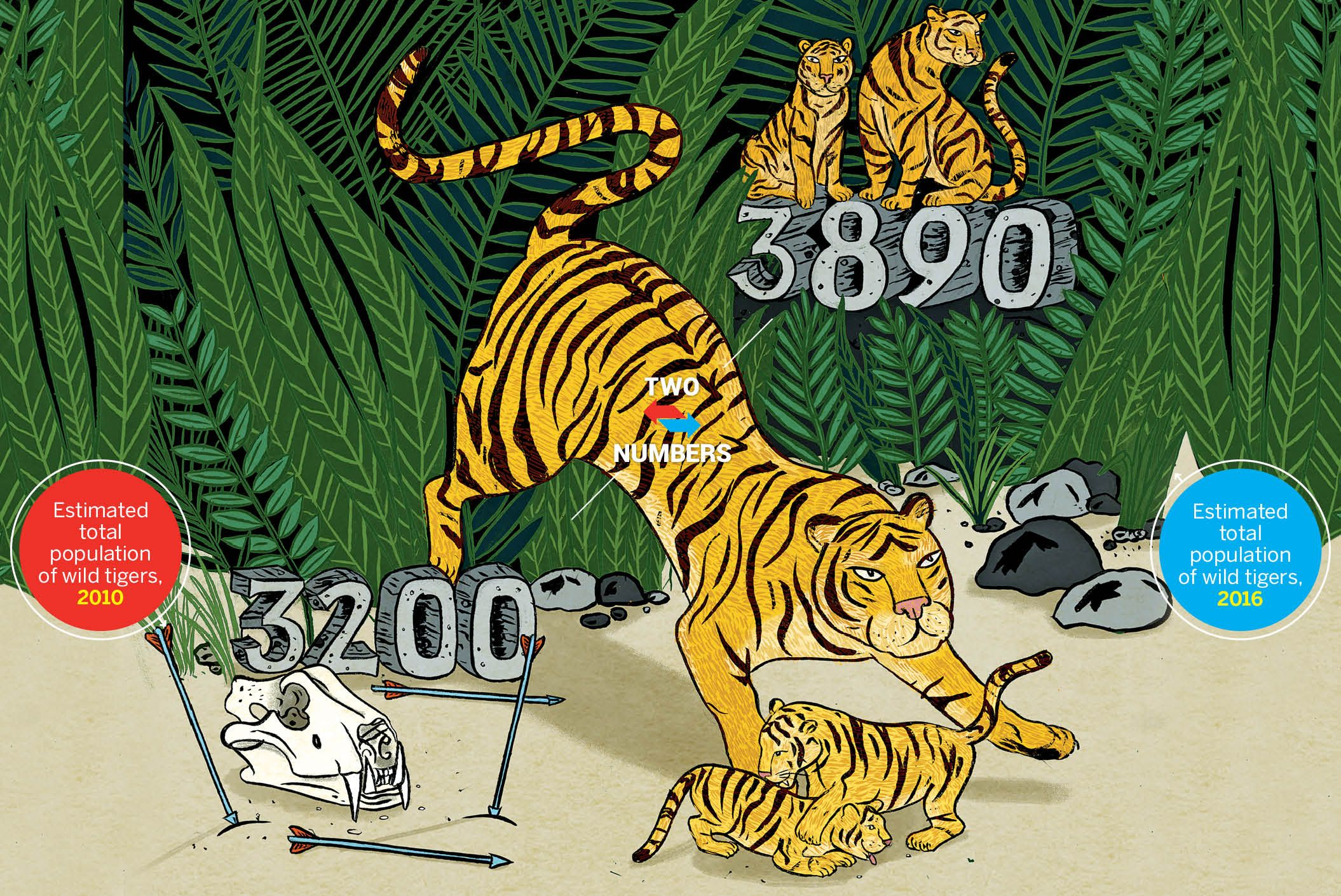 Wild Tiger Population Increases For First Time in 100 Years.