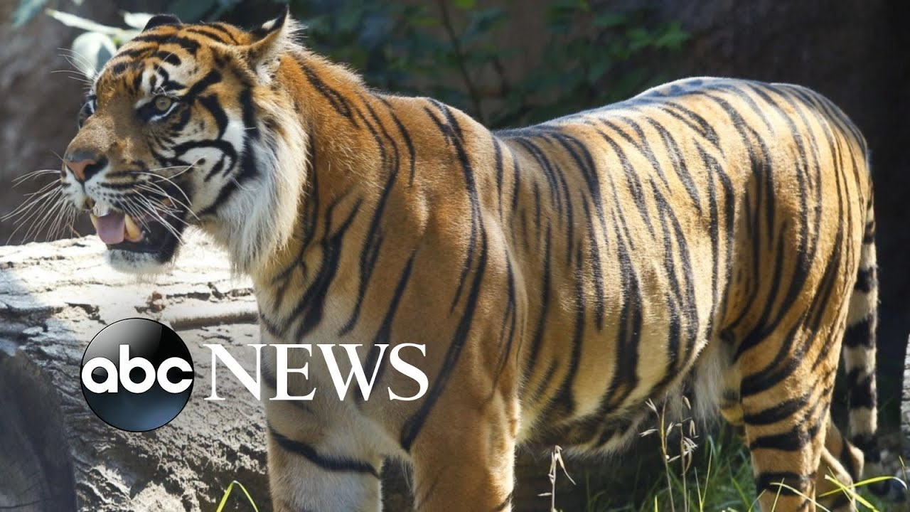 Zookeeper hospitalized after tiger attack at Topeka Zoo.