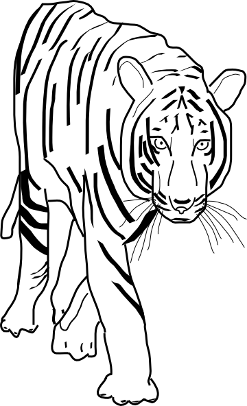 Free Black And White Tiger Clipart, Download Free Clip Art.