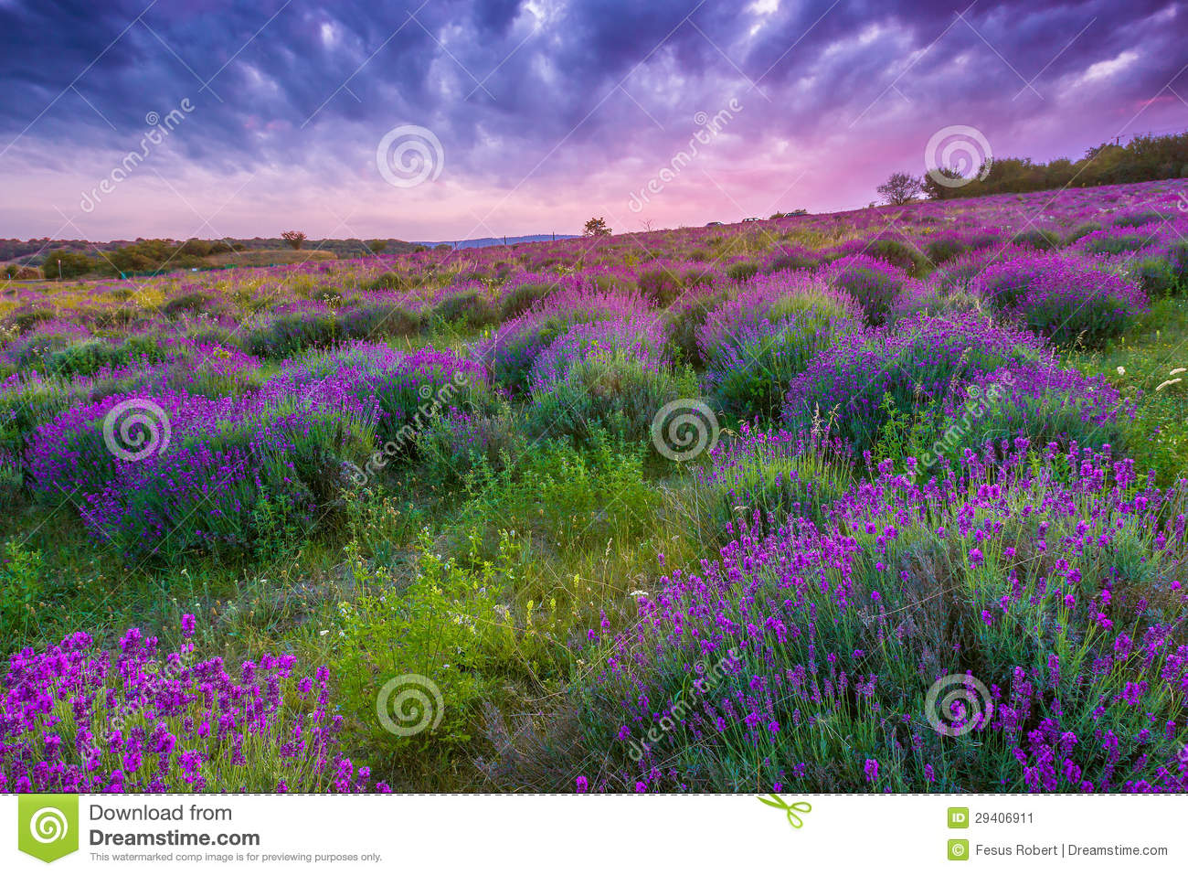 Sunset Over A Summer Lavender Field In Tihany, Hungary Stock Image.