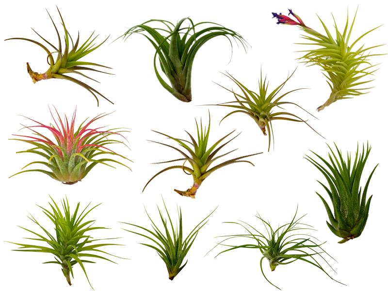 1000+ images about air plant terrariums on Pinterest.