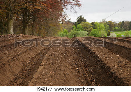 Picture of Farm Land Tilled And Ready For Planting; Perth Scotland.