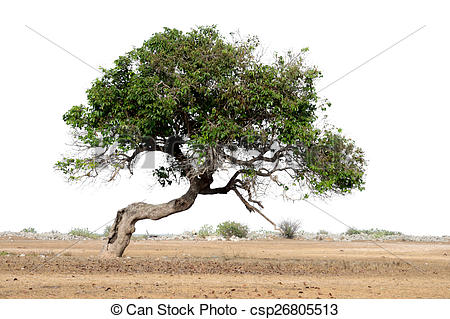 Stock Photography of tilt tree csp26805513.
