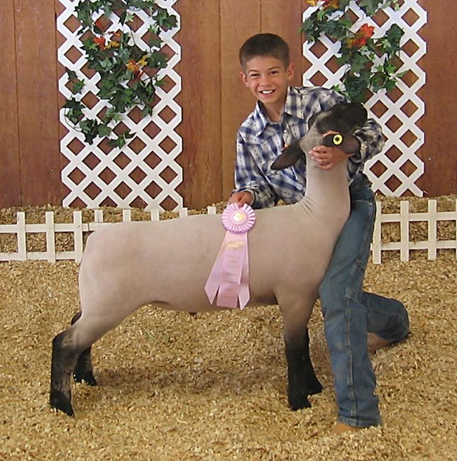 1000+ images about lambs on Pinterest.