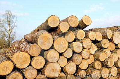 Timber clipart free.