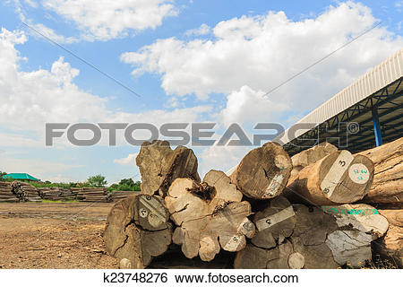Stock Images of Big Teak timber storage yaed. k23748276.
