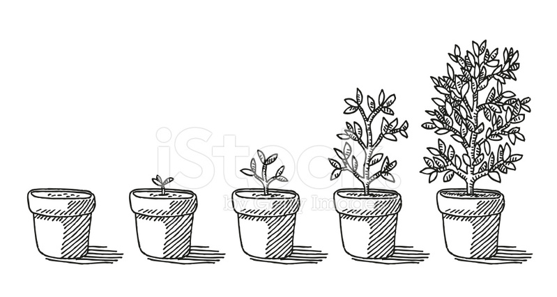 Potted Plant Growing Timelapse Drawing stock photos.