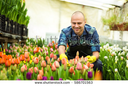 Springtime Stock Images, Royalty.