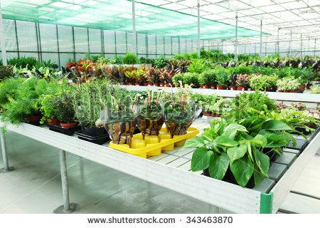 Greenhouse Garden Stock Photos, Royalty.