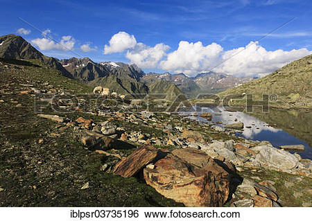 """Stock Images of """"Sheep grazing at Timmelsjoch Pass or Passo del."""