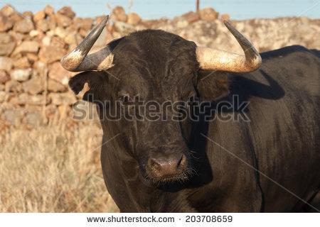 Taurus free stock photos download (19 Free stock photos) for.