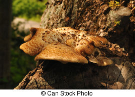Stock Photos of tinder fungus in the forest csp29322633.