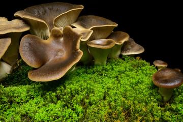 Найти изображение: мицелий.